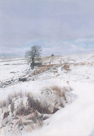 Coalcleugh in the Snow